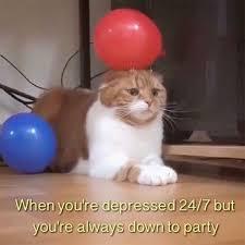 Depressed Cat Meme - cat memes purrfect love