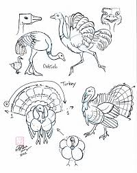 draw ostrich and turkey by diana huang on deviantart