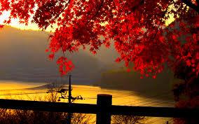 cute autumn backgrounds autumn wallpaper hd qygjxz