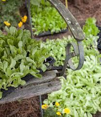 kitchen gardening ideas vegetable garden tips kitchen garden ideas