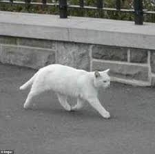 White Cat Meme - what on earth is this half cat captured on google streetview is a