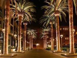 palm tree christmas tree lights christmas season unique palm tree christmas lights images