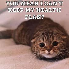 Mean Kitty Meme - you mean i can t cat meme cat planet cat planet
