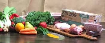 considering a raw food diet for your dog pooches at play