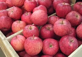 apple japan japan explores indonesian apple market