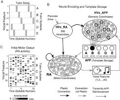 Anatomy And Physiology Songs Articles Journal Of Neurophysiology