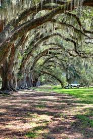 Mississippi scenery images Biloxi mississippi been there done that pinterest southern jpg