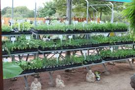 Fall Vegetables Garden by Fall Vegetable And Herb Transplants U2013 The Natural Gardener