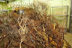 manzanita branches for sale green flowers mercury glass vases manzanita branches