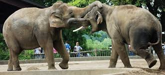 harry frazier family elephant encounter louisville zoo
