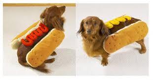 Hotdog Halloween Costume Dog Costumes Dogs Mustard Ketchup