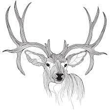 deer head vector animal illustration for t shirt sketch tattoo