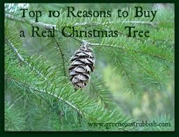 top 10 reasons to buy a real tree green coast rubbish