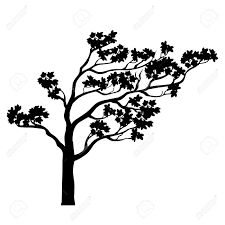 tree silhouette black and white isolated outline a