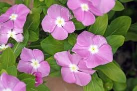 flowering plants types of flowering plants biology tutorvista