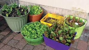 fabulous best soil mix for container vegetable garden container