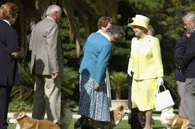 the queen adopts new corgi she u0027fell in love with u0027 during regular