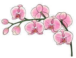draw flowers nails tags draw flowera cool