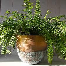 Low Bowl Planters by Copper Planters