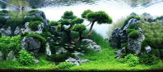 amano aquascape takashi amano aquascaping aquascaping