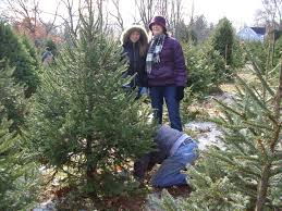 christmas season where you can cut your own christmas tree in nh