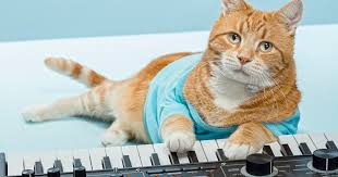 Cat Playing Piano Meme - condolences pour in for bento the keyboard cat pinnacle health
