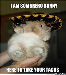 Funny Rabbit Memes - sobrero bunny bunny funny bunnies and animal