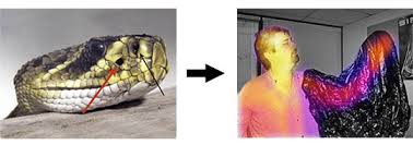 What It Looks Like To Be Color Blind Colors Animals See Asu Ask A Biologist