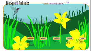 cool games for kids learn about backyard animals youtube