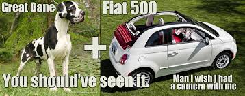 Fiat 500 Meme - spotted a great dane hanging out of a sunroof of a fiat 500 while