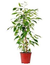 indoor house plants low light indoor house plants for healthier