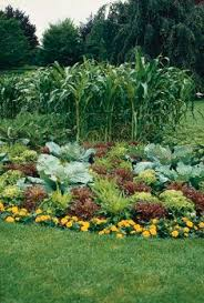 Fall Vegetable Garden Ideas by 8 Best 5 Minute Presentation Images On Pinterest Gardening Tools