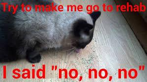 Sassy Cat Meme - cat page 2 ming memes