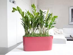 house plants no light 5 best low light indoor plants topworldsexiest