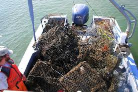 crabbers find pots of money in abandoned fishing gear takepart