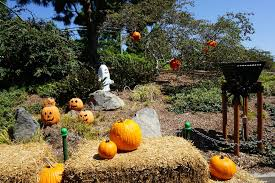 halloween fun at legoland california gone with the family