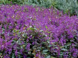 great ground covers for your garden gardening with angus