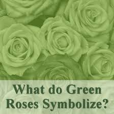 green roses all the different colors of roses and their meanings hubpages