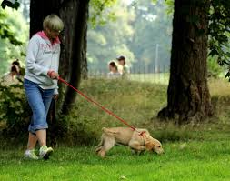 my dog doesn u0027t like other dogs 5 steps to stop the barking and