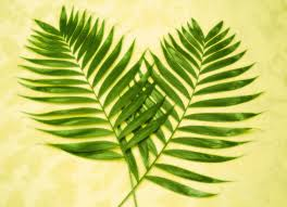 palm branches for palm sunday the point of palm sunday iowa agribusiness network