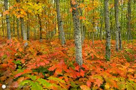 autumn in the valley willamette valley oregon richard bitonti