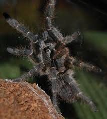 tarantulas by experience level pethelpful