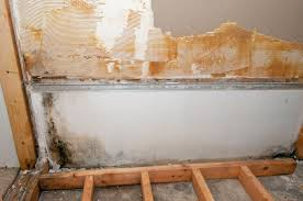 mold remediation scam or worthwhile investment