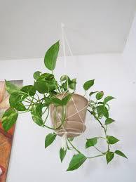 beacon st manor diy hanging planter