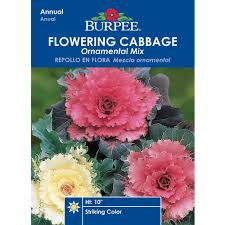 burpee flowering cabbage ornamental mix seed 48877 the home depot