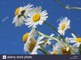 flowers near me flower delivery stock photo royalty free image