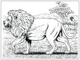 mountain lion coloring pages printable adults preschoolers