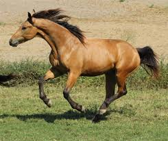 Horse Trailers For Rent In San Antonio Texas Dressage Horses For Sale At Warmblood Sales Com