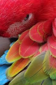 Parrot Decorations Home 162 Best Parrots Images On Pinterest Animals Beautiful Birds