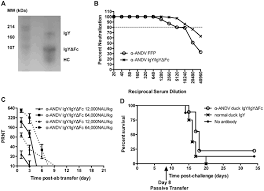 dna vaccine generated duck polyclonal antibodies as a postexposure